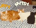 Mitzy, Muffy & Boo