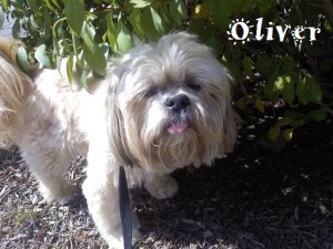 Oliver is Pet of the Month for November 2010