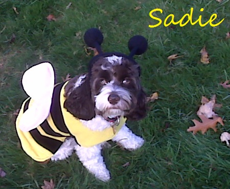 Sadie M